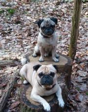 Hilfe Rudelprobleme Hundeschule Nürnberg