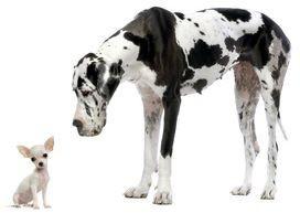 Kompetente Hundeschule