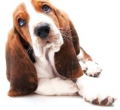 Ängstlicher Hund Nürnberg
