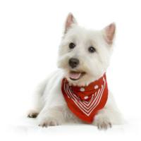 sympatische Hundeschule, symptatische Hundeschule Nürnberg, sympatischer Hundetrainer, sympatischer Hundetrainer Nünberg, seriöse Hundeschule, seriöse Hundeschule Nürnberg