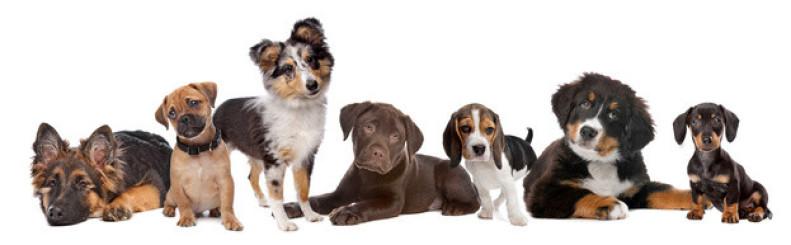Hundekurse Nürnberg
