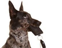 Hund Probleme Auto fahren
