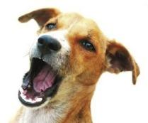 Hund bellt Nürnberg