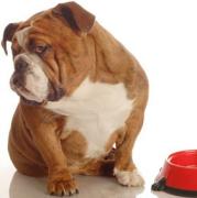 Ernährungsberatung Hund