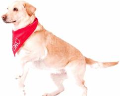 Braver Hund Nürnberg
