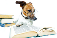 Gehorsamer Hund, schlauer Hund, angenehmer Trainer Hund, kompetenter Hundetrainer