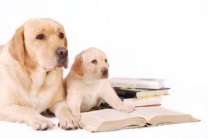 Faire Hundeschule