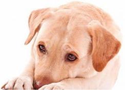 Liebe Hundeschule