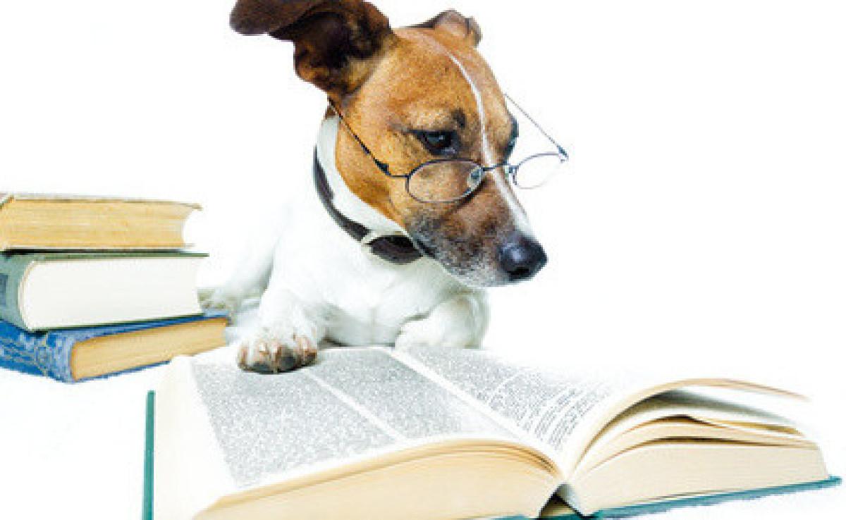 Hundeschule mit Niveau Nürnberg
