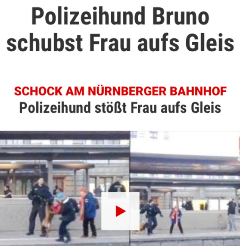 Bekanntester Hundetrainer Nürnberg