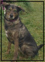 Trauer Hund verstorben Nürnberg