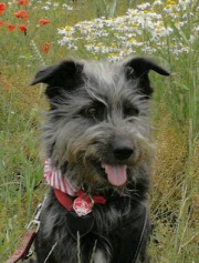 Gesunder Hund Nürnberg
