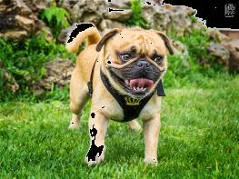 Angst vor Hunden Nürnberg